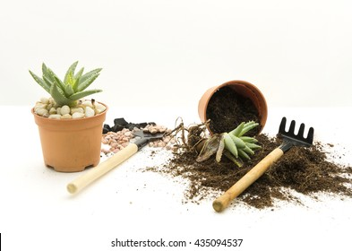 Home gardening as hobby.  Uproot plant for plant care.  Repot with basic garden tools and accessories of trowel, cultivator, pebbles, black coal and soil mixtures for succulents.