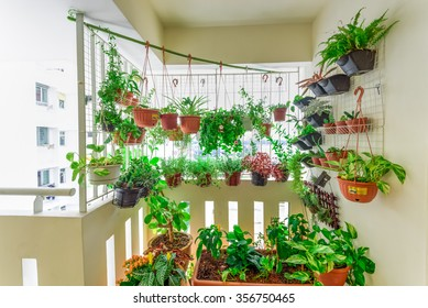 Home grown flowers and herbs in the hanging pots at balcony at Ang Mo Kio area. Growing a garden in a sharing apartment's balcony/corridor is popular in Singapore. Great for urban farm publications