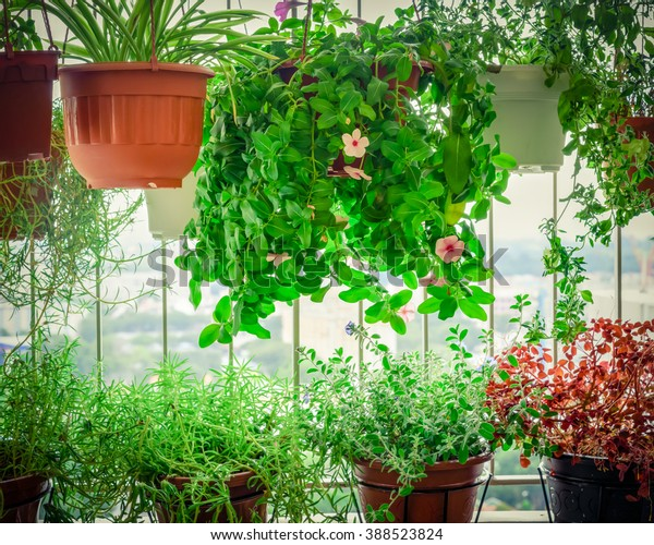 Home grown flowers and herbs in the hanging pots at balcony at Ang Mo Kio area. Growing a garden in a sharing apartments balcony/corridor is popular in Singapore. Urban farm concept. Vignette added.