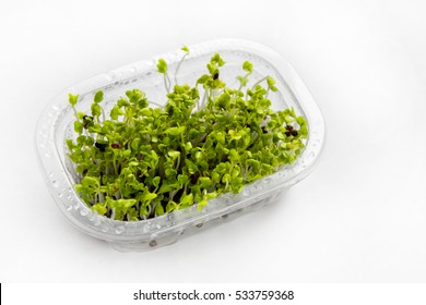 Home grown microgreens - broccoli sprouts isolated on white background. Sprouts are source of myrosinase enzyme and sulforaphane as anticancer treatment.
