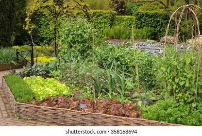 Home Grown Vegetables Growing in a  Rural Cottage Garden at Rosemoor in Devon, England, UK