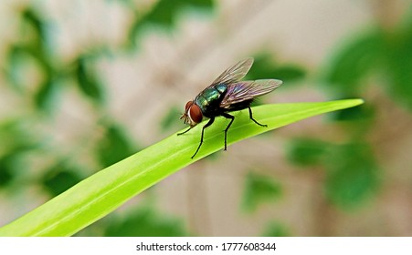Home housefly sitting on a long green leaf close up macro shoot