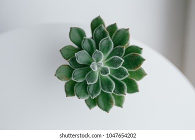 home indoor plants: Aloe cactus succulent plant. small plants on the windowsill. Close up of small cactus succulent in flower shop as green background. concept: gardening and Hobbies for adults