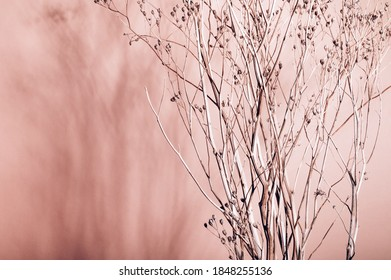 Home interior floral decor from natural dry flowers or twigs. Strong shadows on pink background