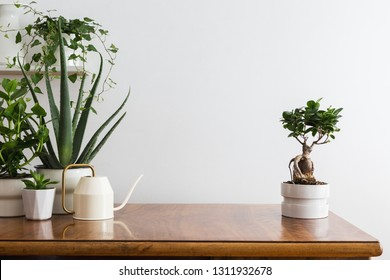 Home interior with plants in different flower pots and white wall mock up