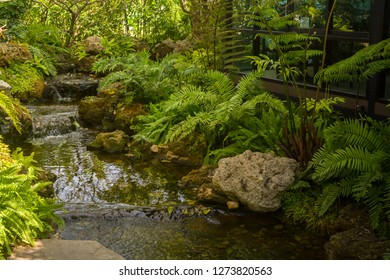 Home Japanese garden with stones, water and bushes