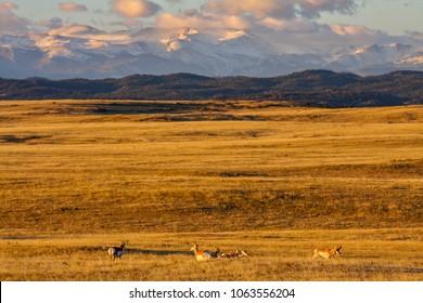 Home on the Range, Wyoming