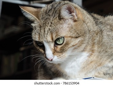 Home pet animal cat portrait close up