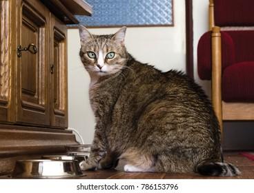 Home pet animal cat sitting near food