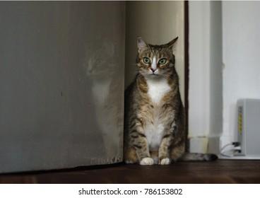 Home pet animal cat sitting near door