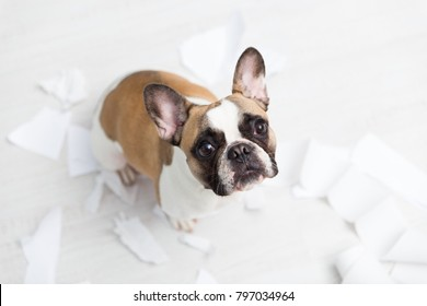 Home pet destruction on white bathroom floor with some piece of toilet paper. Pet care abstract photo. Small guilty dog with funny face.