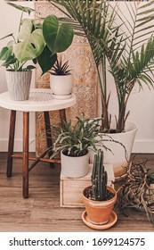 Home plant heaven. Green plants in boho living room. Monstera, cactus, succulent plants. Tropical, dessert flowers. Bohemian lifestyle. Ceramic pots. Home garden hobby. Orange, sand, green colors.