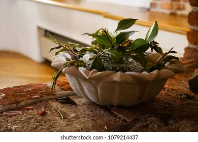 Home plant in a vase on a brick stand