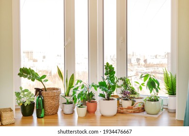 Home plants and flowers on a wooden windowsill - Shutterstock ID 1934476667