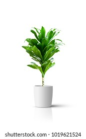 Home potted plant isolated over white background
