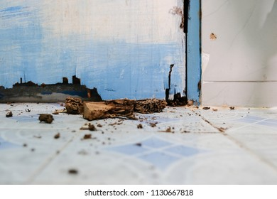 Home problem, Wood chips from damaged door that termites eat inside.