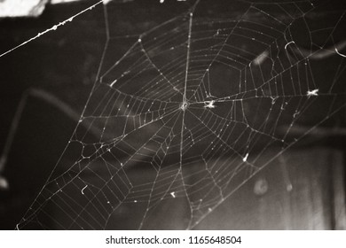 home spider web