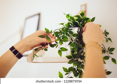 Home Staging - home stager sets up a white apartment with a plant