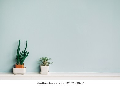 Home Tillandsia and Cactus in small pot on pastel blue wall background, Vertical