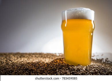 Homebrew Blonde Pint of Beer and Pislner Malt Grain over Bright Background in Studio