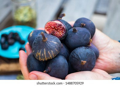 Homegrown black mission fig. Woman hands holds dark sweet raw figs.