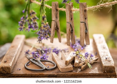Homegrown and fresh lavender hanging on a line with clasps
