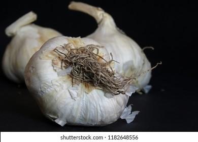Homegrown fresh raw garlic closeup.