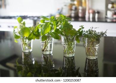Homegrown herbs: lemon balm, sweet basil, mint and thyme