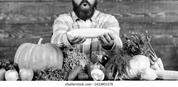 Homegrown organic harvest benefits. Grow organic crops. Community gardens and farms. Healthy lifestyle. Farmer hold corncob or maize wooden background. Farmer presenting organic homegrown vegetables.