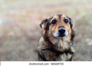 Homeless abandoned stray dog with very sad smart eyes
