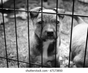 Homeless animals series. Pup looking out from behind the wires of his cage. Black and white image
