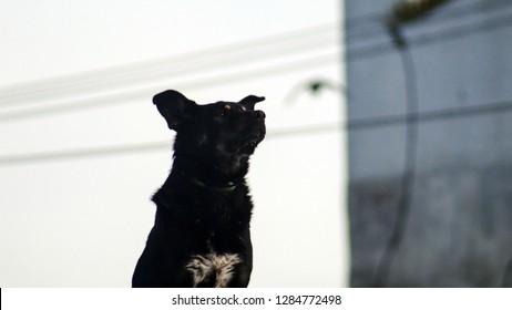 Homeless black beast watchdogs in the city in winter