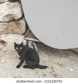 Homeless black cat near a garbage can