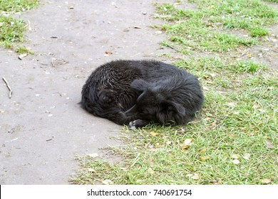 A homeless black dog sleeps on the ground with green grass, curled up in a ball. Autumn background