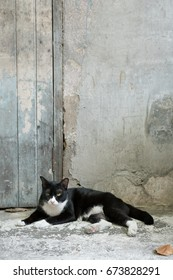 The homeless cat lying on the old house.