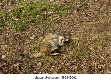 Homeless cat lying in the sun