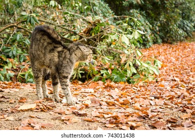 A homeless cat on fallen leaves in an aggressive stance.