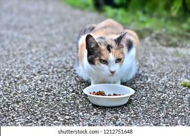 Homeless cat, poor animal