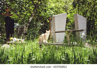 A homeless cat sits on a bench in an old cemetery on a summer day.