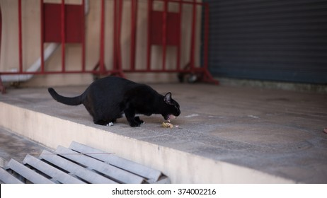 Homeless cat wander around the street. She is also pregnant and starving. This can be used in animal protection organization