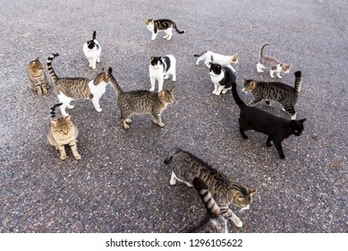 Homeless cats waiting for food.