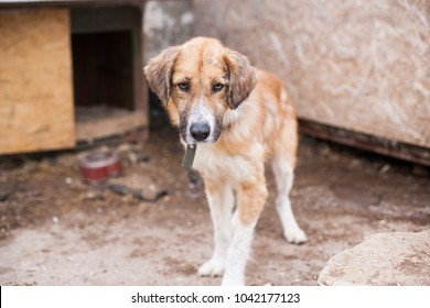 homeless dog in cage