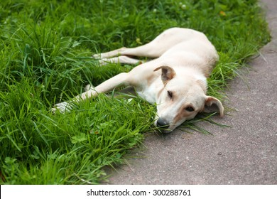 Homeless dog is laying on the grass