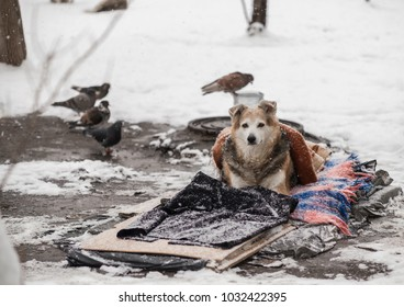 A homeless dog lies on the snow under a blanket. Care of homeless animals.