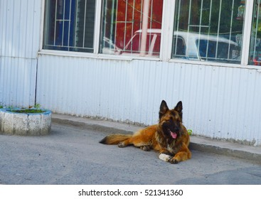 Homeless dog lying in the shade
