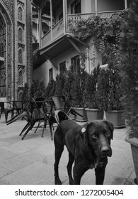 homeless dog near Juma Mosque and arabic style building in Old Tbilisi, Georgia