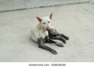 Homeless dog on concrete floor