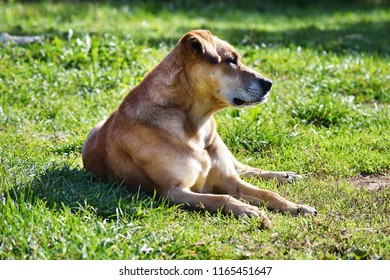 Homeless dog on the grass