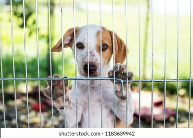homeless dog puppy behind dog shelter bars