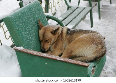Homeless dog resting in abandoned green armchair under the snow